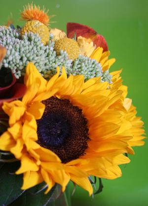 Domaniflowers